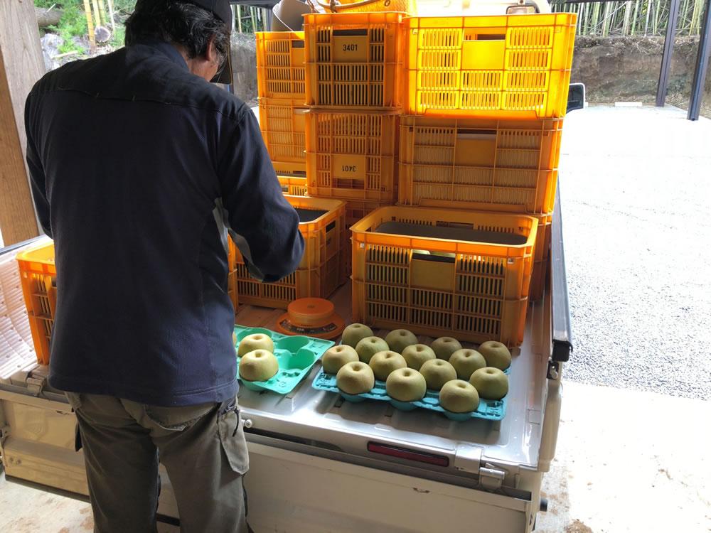 梨の出荷準備